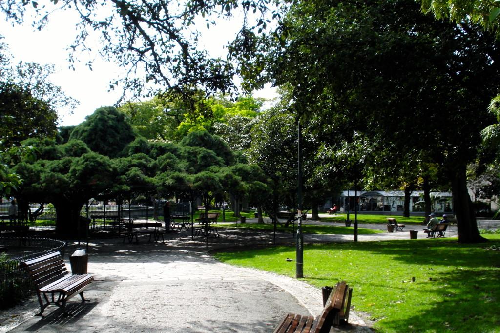 Il cedro gigante in piazza Principe Real