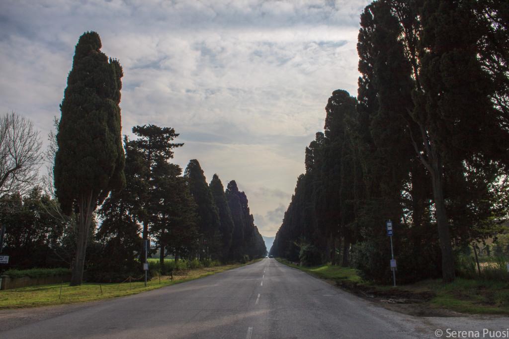 Bolgheri-maggiodivino
