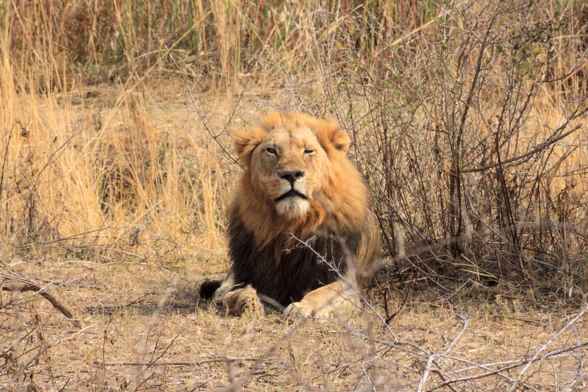 Leone-Kruger