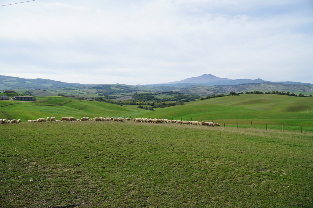 Campagna Val d'Orcia