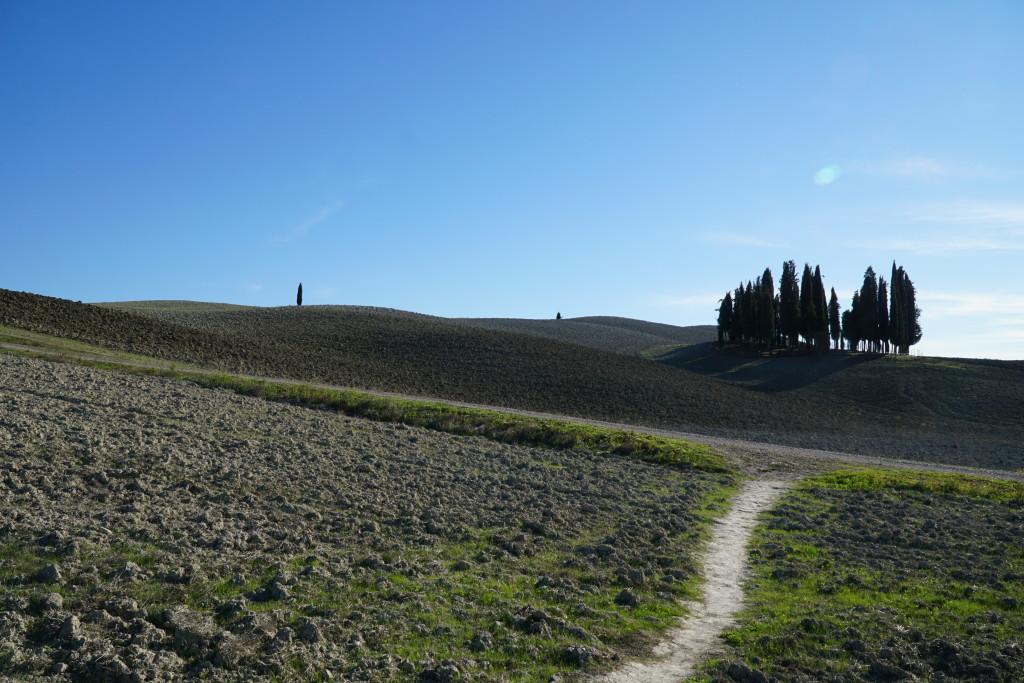 Cipressini di San Quirico d'Orcia
