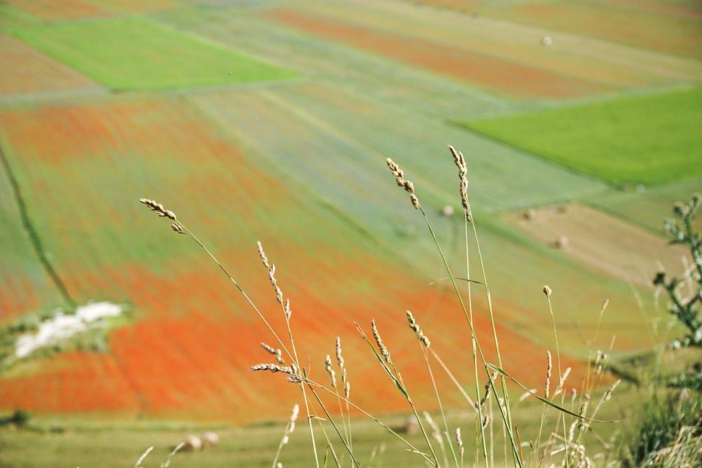 Castelluccio-di-Norcia