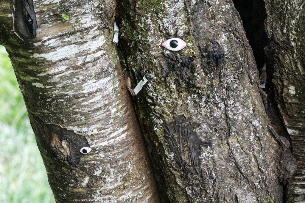 orsigna-tiziano-terzani-albero-con-gli-occhi