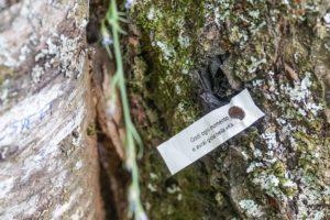 orsigna-tiziano-terzani-messaggio-sull-albero
