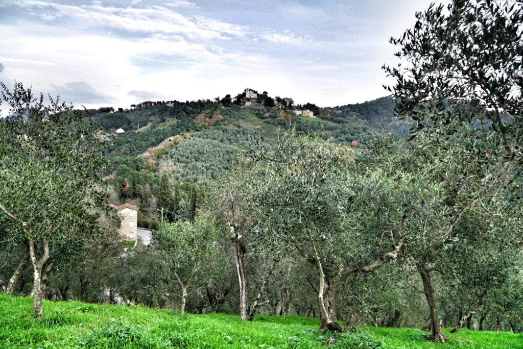 betuscan-olivi