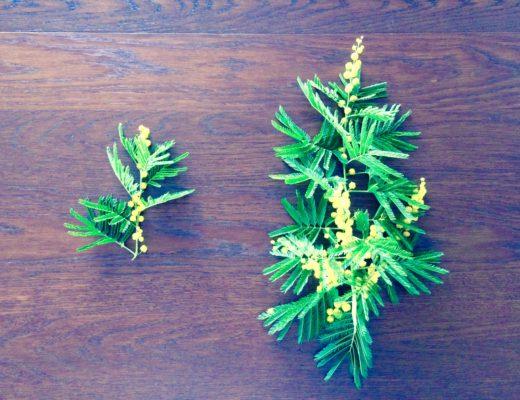 festa-della-donna-mimosa
