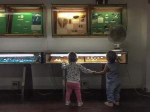 museo-delle-conchiglie