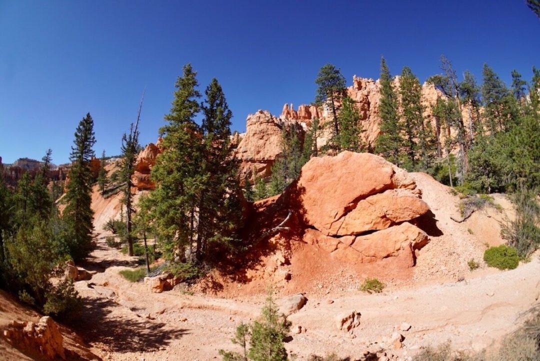 vegetazione nel Bryce Canyon